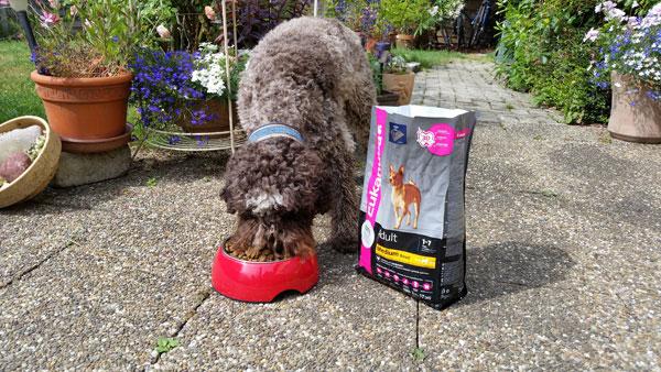 Unser Testhund beim fressen des Hundefutters