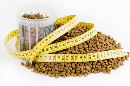 Die Futtermenge ist wichtig beim Hundefutter