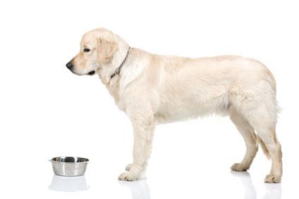 Hundefutter Test für größere Hunde