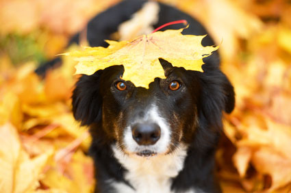 Ob Nass- oder Trockenfutter, hauptsache kein Getreide im Hundefutter