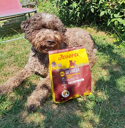 Hund mit dem Trockenfutter Josera Optiness