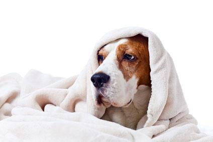 Laktoseintoleranz bei Hunden kann bei jeden Hund vorkommen