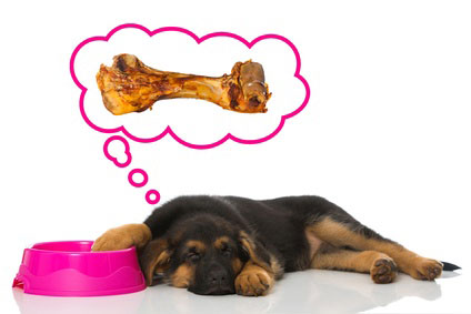 Was tun wenn der Hund nicht fressen will
