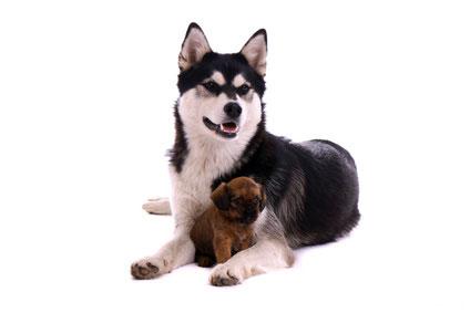 Nassfutter im Hundefutter Test