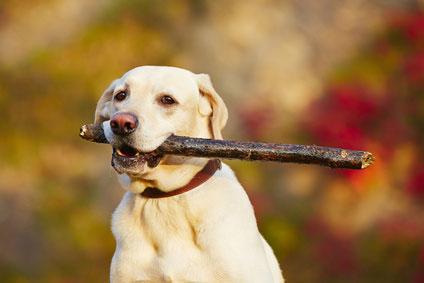 Vitamine für die Vitalität des Hundes
