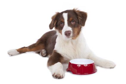 Hundefutter Testberichte