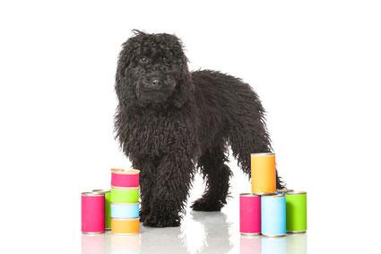 Nassfutter Test - Hundefutter mit hohen Wasseranteil