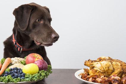 Veganes Hundefutter als alternative Ernärhungsform des Hundes