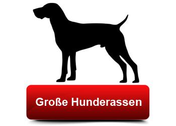 tf-grosse-hunderassen