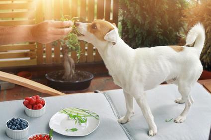 Vegetarian dog