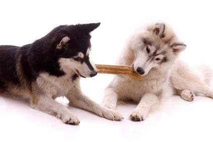 Die Hundenahrung sollte mit Bedacht ausgewählt