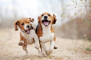 Futterneid Bei Hunden Hundefutter Test