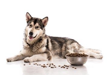 hundefutter aufbewahrung