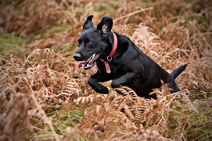 Konnen Wurmkuren Dem Hund Schaden Hundefutter Test