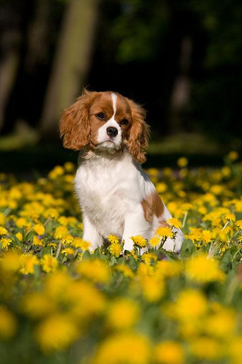 Besonder im Wald werden Hunde von Zecken befallen