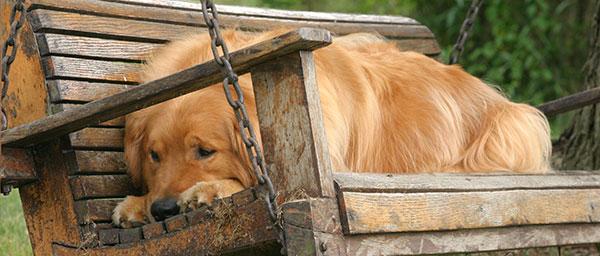 Kranker Hund au fder Bank