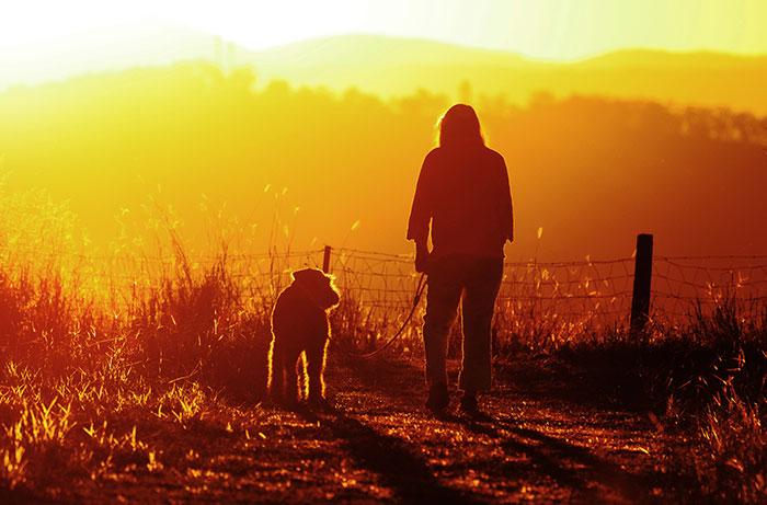 Hund und Mensch im Alter