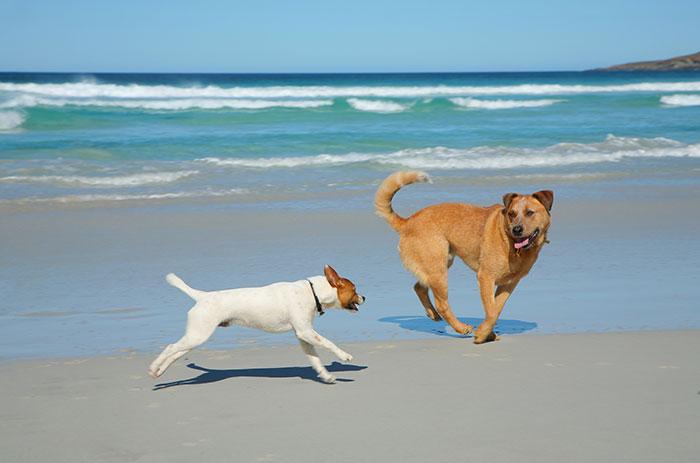 Hunde am Meer die spielen - fit im Alter
