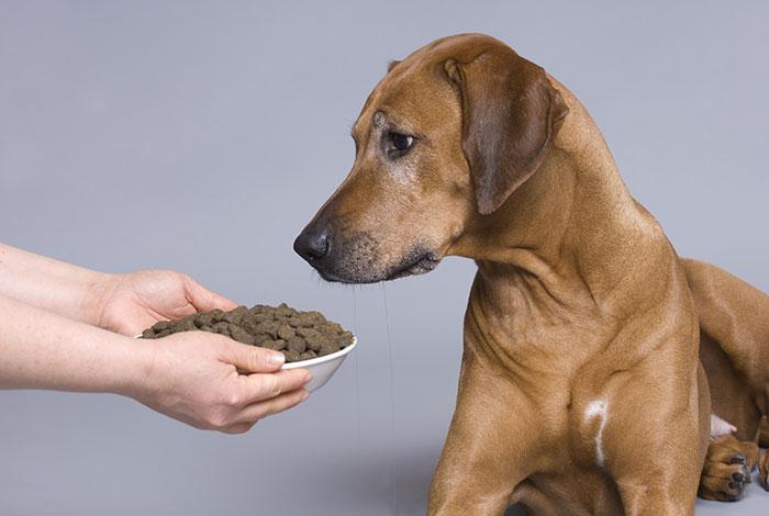 Hund schaut auf Trockenfutter ohne zu fressen