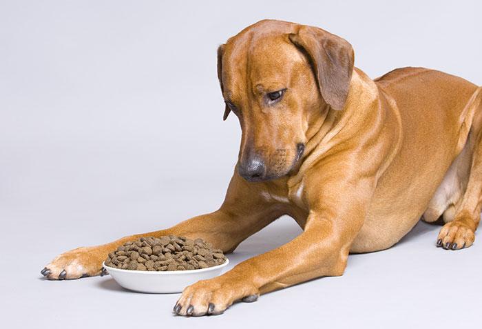 Hund schaut angewiedert auf Trockenfutter