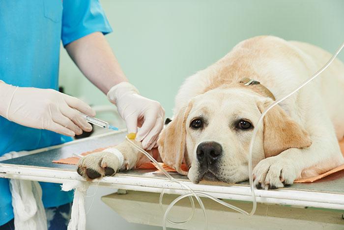 Spritze beim Tierarzt