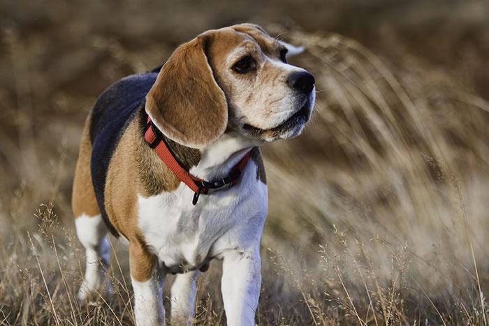 Fastentag für einen normalen Haushund?