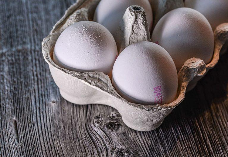 Eier Hundefutter