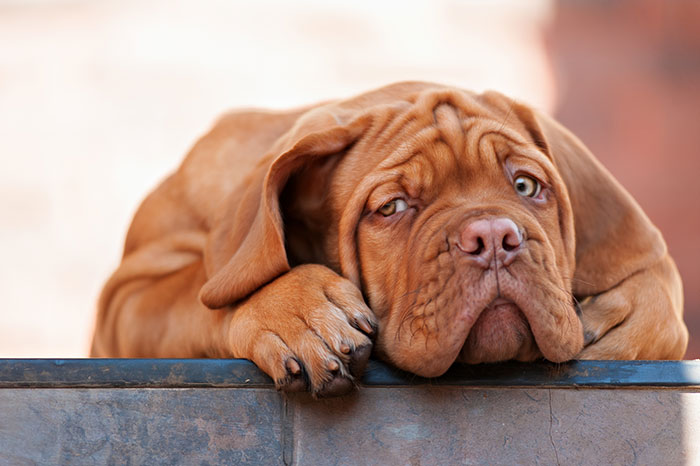 Mythen rund zur Hundeernährung