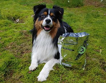 Hund mit Tüte Platinum