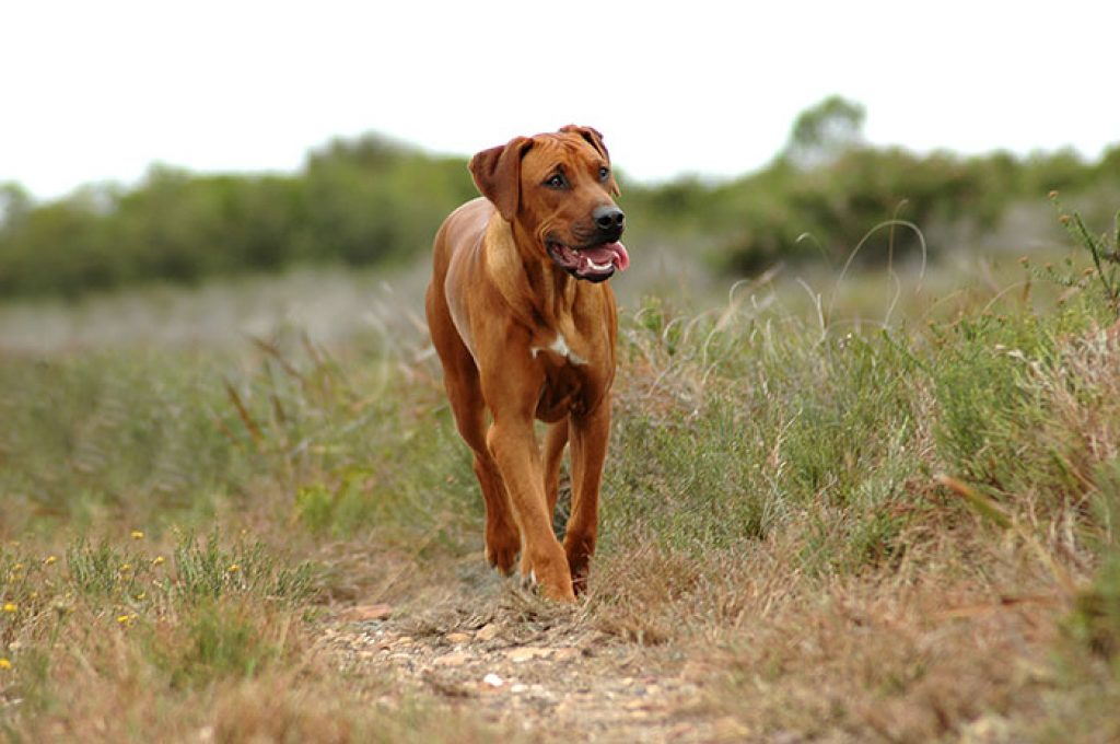 Die Auswahl eines guten Hundefutters ist wichtig