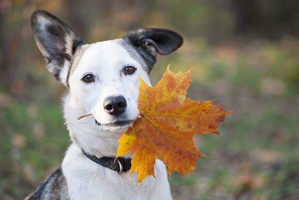 Hundefutter Test im Bereich der Bio Nahrung
