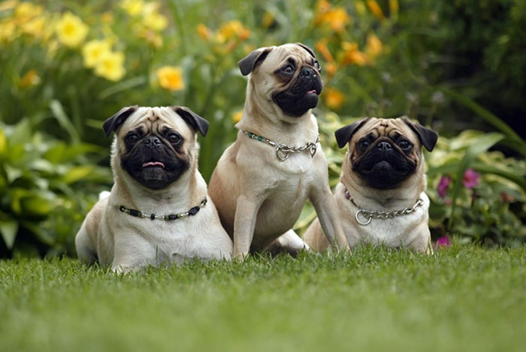 Gesunde Hundeernährung auswählen dank Tests