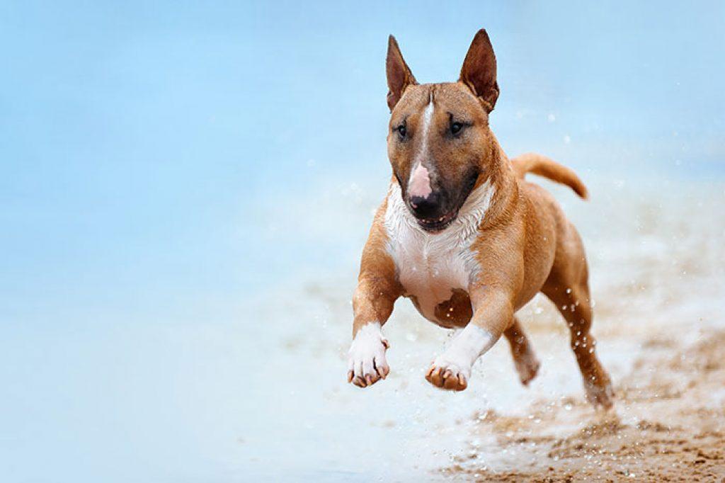 Hundefutter Vergleichsberichte helfen bei der Auwahl