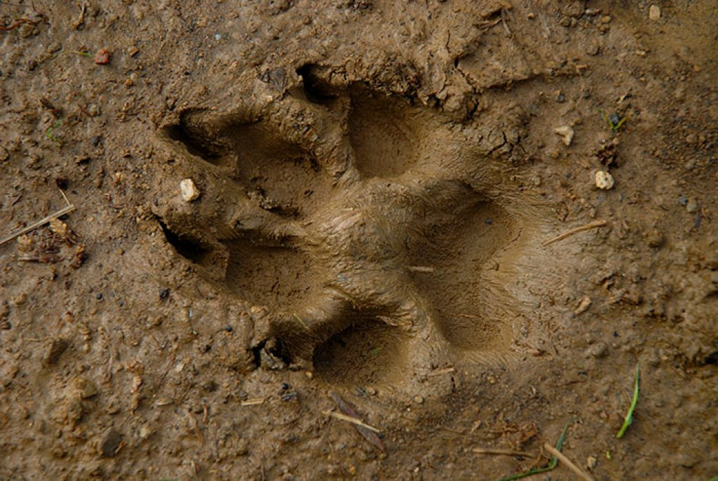 Ernärhung des Hundes an den Wolf angepasst