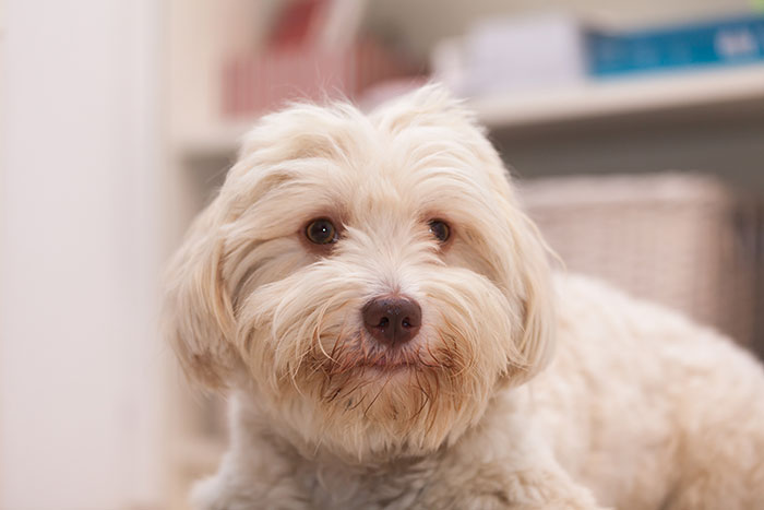 Es gibt viele Ursachen für das Erbrechen eines Hundes