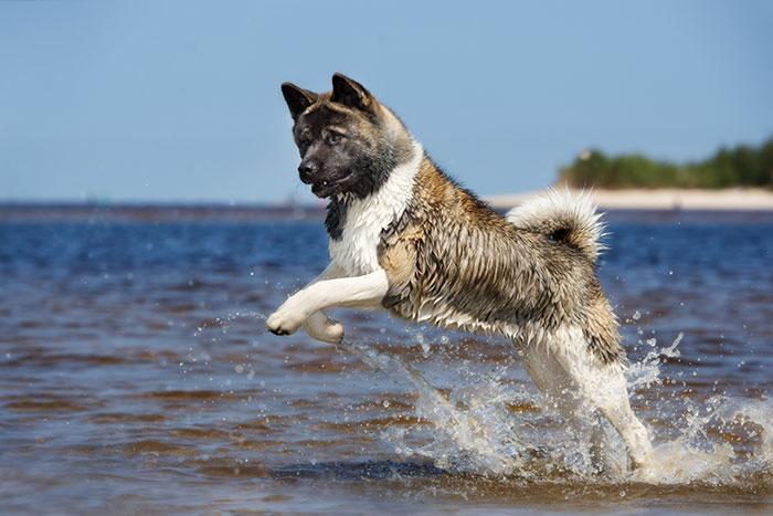Der Hund verliert viel Wasser