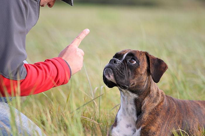 Hund aufmerksam