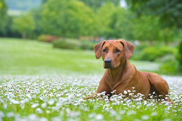 Hund in einer Wiese mit Blüten