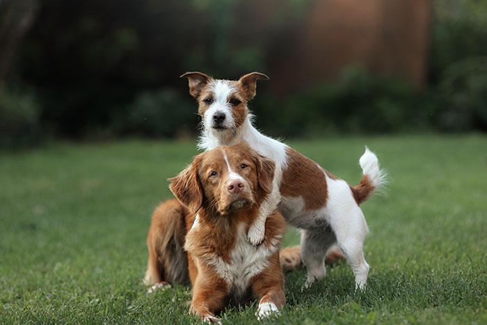 Verhalten von Hunden untereinander