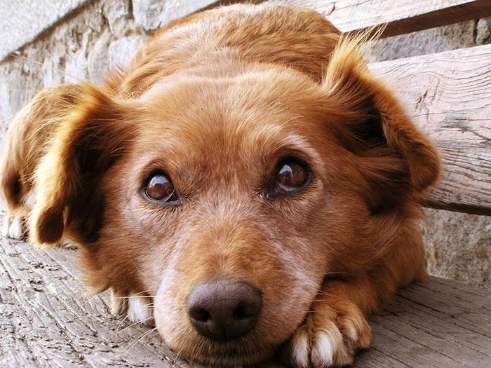 Hund unterwürfig auf einer Bank