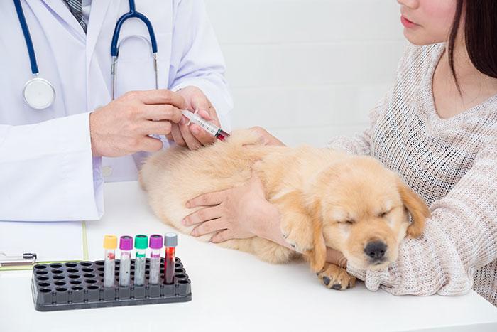 Hund mit Leishmaniose beim Tierarzt