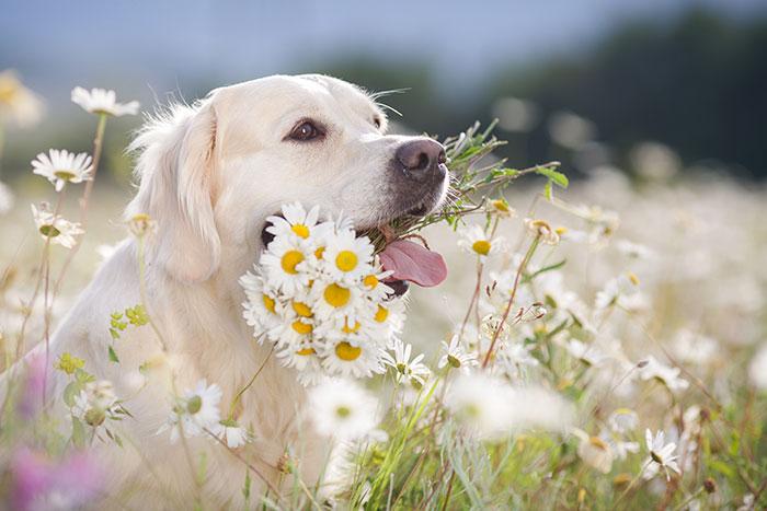 Hund mit Blumen im Maul