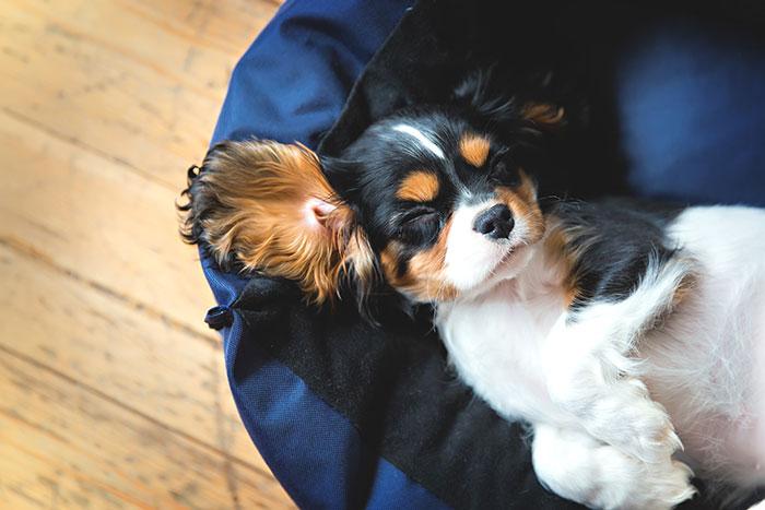 Hund entspannt