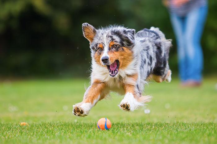 Hund aktiv