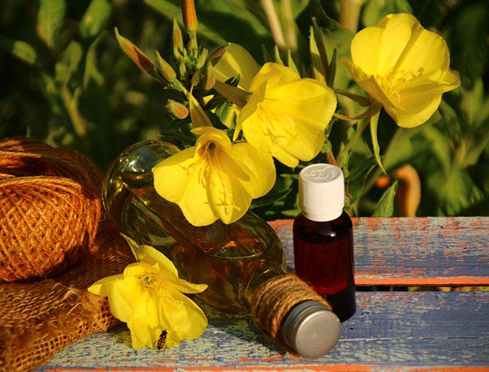 Nachtkerzen Blume und Öl Fläschchen