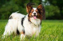 Bierhefe für Hunde – Ein natürliches Heilmittel?
