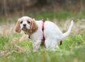 Durchfall beim Hund – Symptome, Ursachen, Behandlung