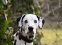 10 giftige Gartenpflanzen für Hunde