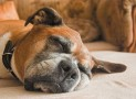 Futterregeln: Ernährung eines älteren Hundes