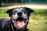 Wie alt werden Hunde?